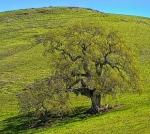 tree in meadow 2