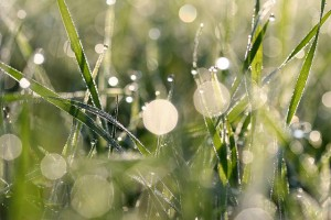 light rain on grass