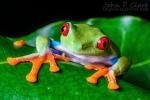 a startling frog