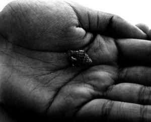 giant's hand