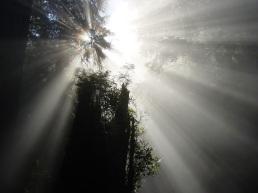 light-comes
