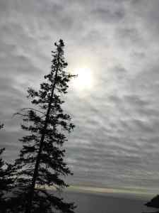 moon behind a tree