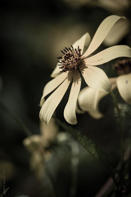 quiet wordless beauty.jpg