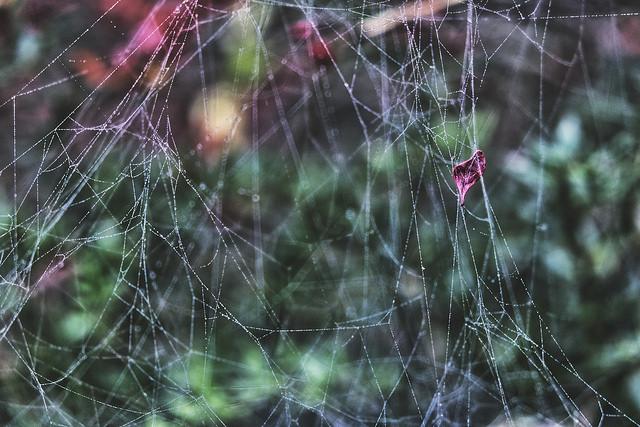 bedewed and bedraggled spider web.jpg