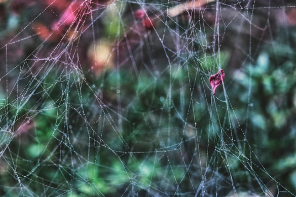 bedewed and bedraggled spider web.jpg