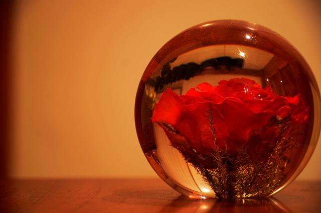 rose preserved in resin globe.jpg