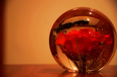 rose preserved in resin globe.jpg