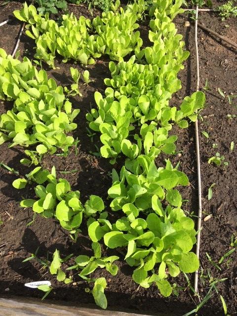 tiny romance in vegetable garden